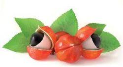Sedmikráska bylinný extrakt Guarana 250 ml imunitní systém kontrola tělesné hmotnosti a metabolismus tuků únava a vitalita doplněk stravy Rodinná farma Sedmikráska