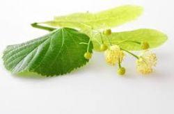 Sedmikráska bylinný sirup Lípa 500 ml Dýchací soustava, vylučování vody, Imunita, doplněk stravy Rodinná farma Sedmikráska
