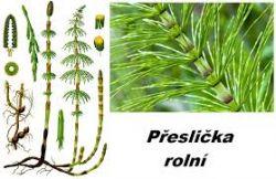 Sedmikráska bylinný extrakt Přeslička  250 ml